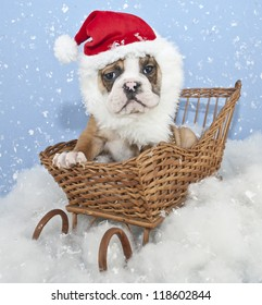 Bulldog puppy sitting in a sled with a Santa hat and beard, with snow falling around him.
