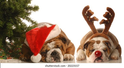 bulldog santa and bulldog rudolph under christmas tree