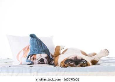 bulldog sleeping in the bed beside a bulldog pillow