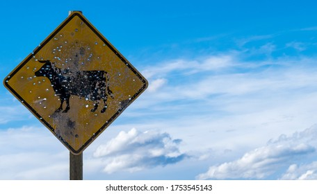 Bullet hole-ridden cattle-crossing sign against vibrant blue sky with clouds