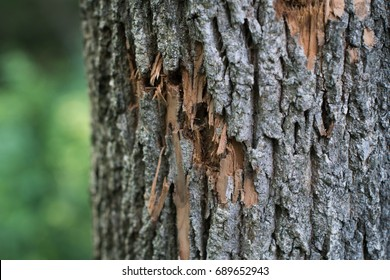 Bullet Holes In Tree With Forest In Background