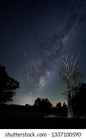 A Bulloke tree stands like a sentinel against the night sky and Milky Way.