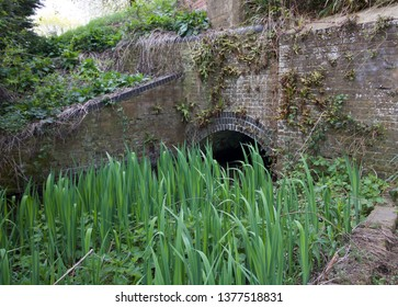 Bullrushes in canal with tunnel and brick wall in background - image