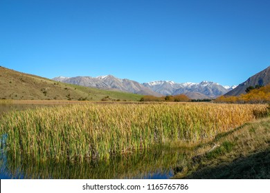 Bullrushes and reeds grow well at the edge of a lake in a valley in the high country of New Zealand