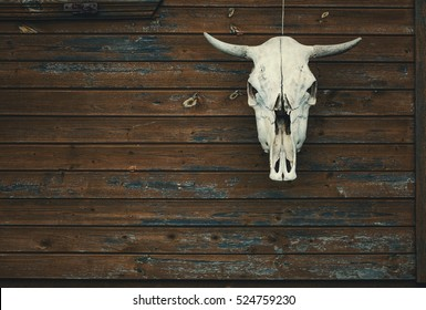 the bull's skull hanging on the wooden wall of the house