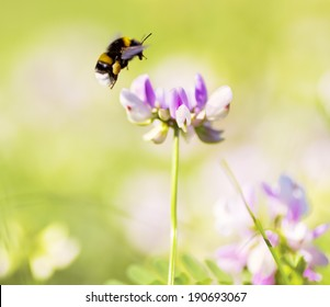 bumble bee flying on flower