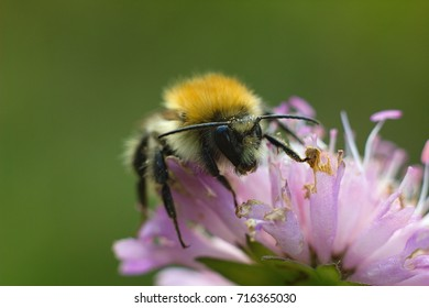 Bumble bee on autumn flower on nature background.