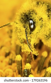 Bumble bee and pollen dust