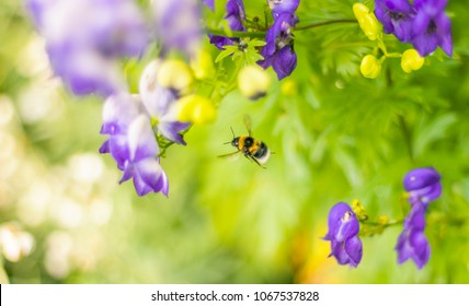 Bumblebee in Flight on Pretty Green Background