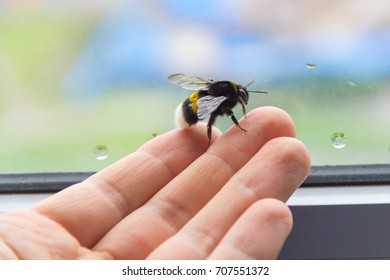 Bumblebee on a hand