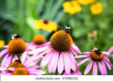 Bumblebees sitting on colorful flowers