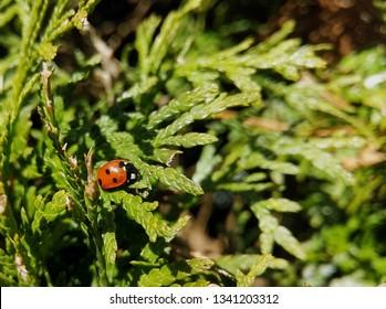 bumbleebee abstrakt animal bug