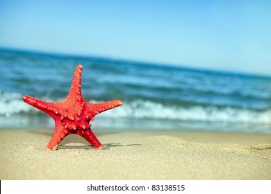 Bumpy red Starfish in the sand with bright blue sky and white clouds in the sky