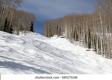 Bumpy ski run surrounded by bare aspen trees at Purgatory ski area in Durango, Colorado