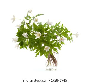 bunch of anemone nemorosa isolated on white