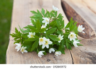 bunch of anemone nemorosa on a wooden bench