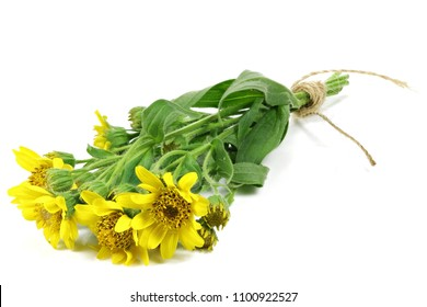 bunch of arnica montana isolated on white background