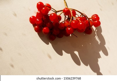 A bunch of backlit red arrowwood berries with a harsh shadow on a textured beige  surface.