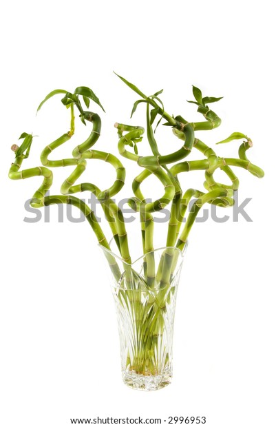 Bunch of bamboo plant in a vase
