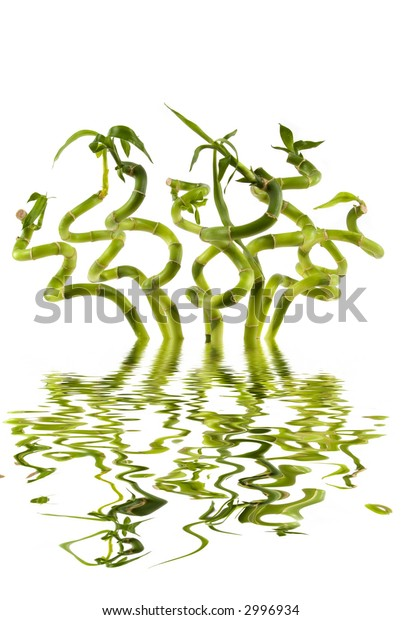 Bunch of bamboo plants in a vase