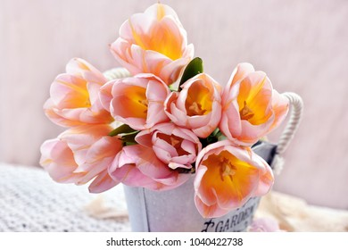 bunch  of beautiful pink-yellow tulips in vintage style metal pot
