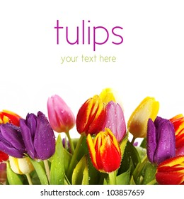 Bunch of beautiful spring flowers - colorful tulips against white background (with sample text)