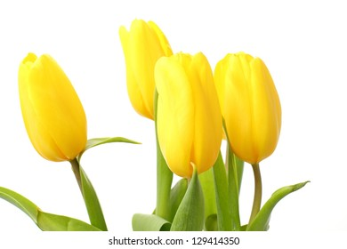 Bunch of beautiful tulips/Delicate yellow flowers