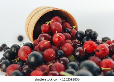 Bunch of berries scattered from wooden mug. Eco food, berry picking concept. Black currant, gooseberry, cherry, summer harvest