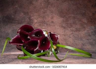 bunch of black calla on a pink hand painted background