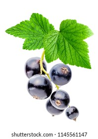 Bunch of black currant with leaves, isolated on white background.