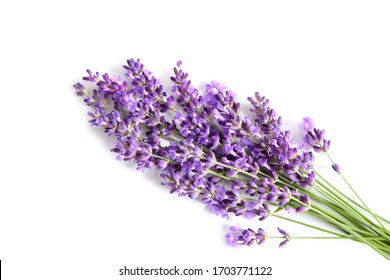 Bunch of blooming lavender on a white background.