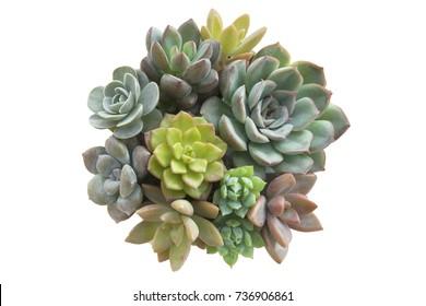 Bunch of Bright Color Beauty Flowering Succulent House Plants Arrangement Close up