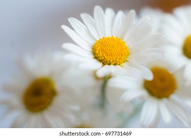 A bunch of chamomiles. single chamomile. chamomile flower