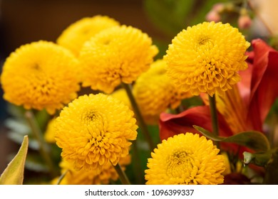 A bunch of chrysanthemums