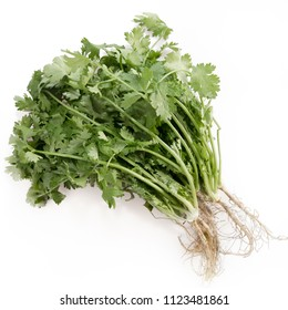 Bunch of cilantro with roots on a white background