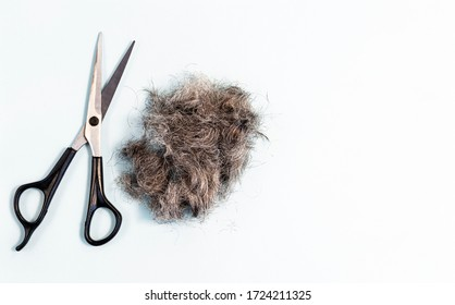 A bunch of clipped hair with scissors. Hair care