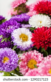 Bunch of colorful asters, autumn flowers, close up