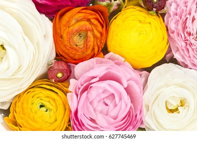 a bunch of colorful flowers