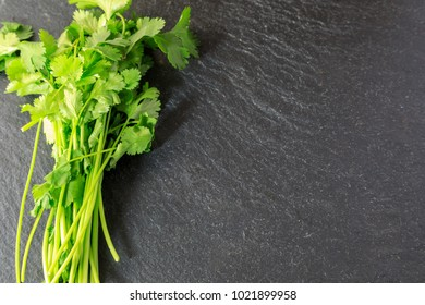 Bunch of Coriander leaves with copyspace
