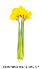 Bunch of daffodil's isolated on a white studio background.