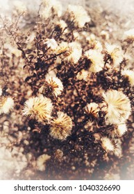Bunch of decaying flowers in vintage style. Retro looking scenery with many plants. Sepia and brown colors of nature. Bokeh in the background, sunny autumn or early spring day. Beautiful view.