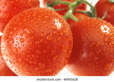 The bunch of dewy tomatoes