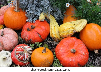 Bunch of different pumpkins stacked in a pile