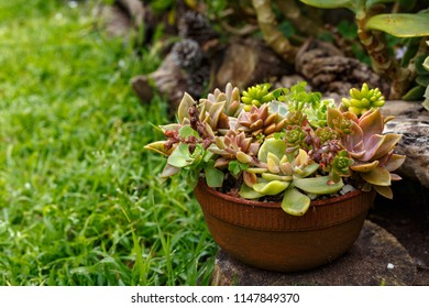 A bunch of different succulents planted in a small pot in the garden