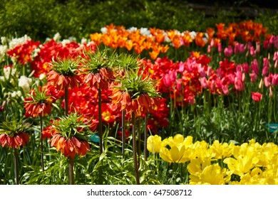 A bunch of different tulips with different colors