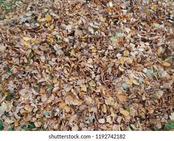 A bunch of fallen autumn leaves closeup