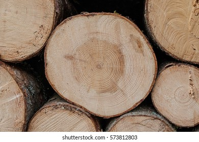 bunch of felled and cut trees