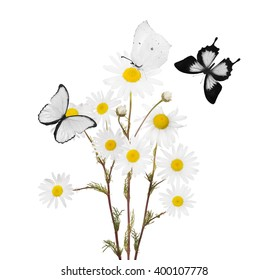 bunch of fine chamomile flowers with butterflies on white background