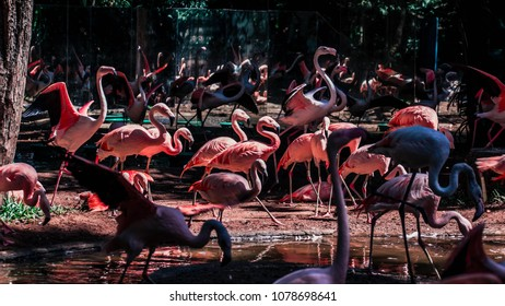 A bunch of flamingos agitated in the Bird Park in the National park of the Iguacu.