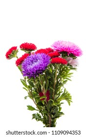 bunch of flowers asters isolated on white background